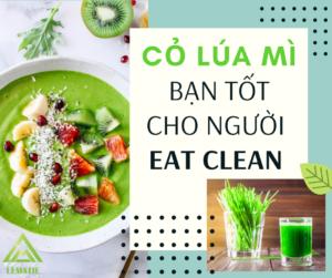 CỎ LÚA MÌ – BẠN TỐT VỚI NGƯỜI EAT CLEAN 🥗🥗